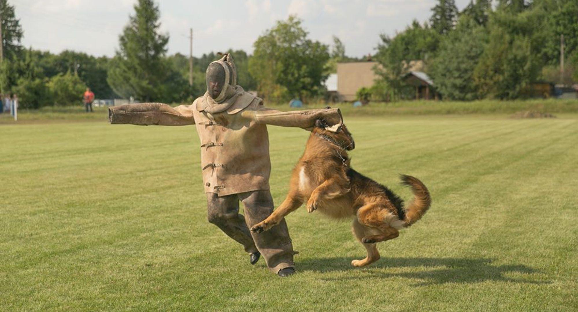 stowarzyszenie hodowców psów użytkowo-obronnych teno